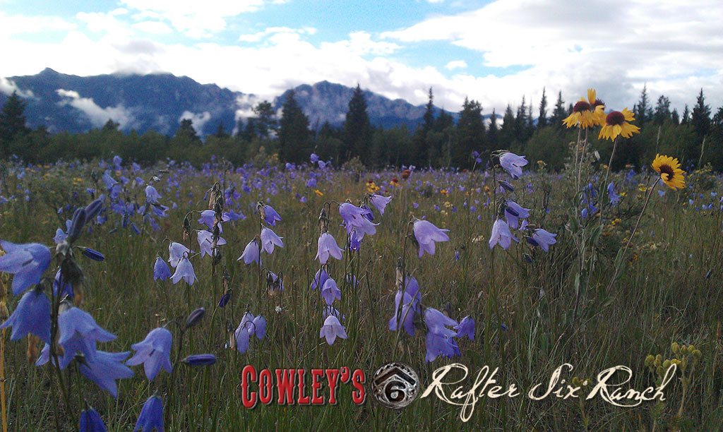 Wildflowers ~ Blue Bells & Brown Eyed Suzies in a Meadow & Mt. Yamnuska at Rafter Six Ranch